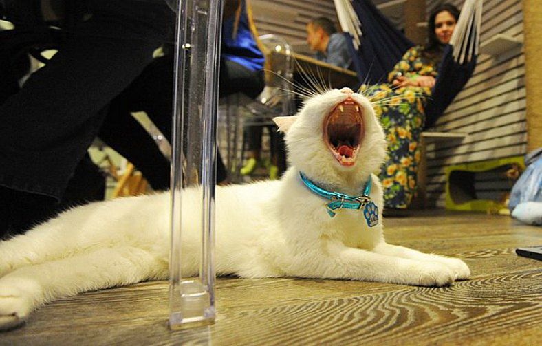 : Moscow CatCafe «Cats&People», Фото 7
