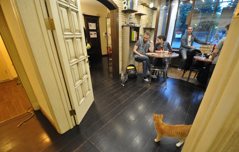 : Moscow CatCafe «Cats&People», Фото 4
