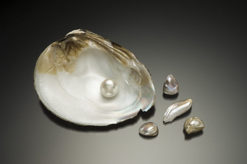 ": In the State Historical Museum opened the exhibition ""Pearls: treasures of the seas and rivers"", Фото 1"